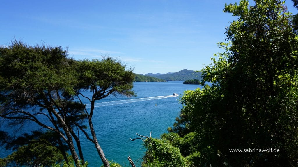 Picton - Bobs Bay Track - meine Reise auf die Südinsel in Neuseeland